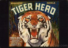 Tiger Head, Orange Crate Label, Washington Navels Advertising Reproductions