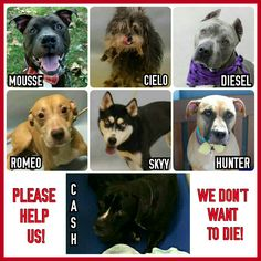 THE KILL LIST FOR SUNDAY 10-9-16PLEASE SHARE TO SAVE A LIFEALL THESE DOGS ARE AVAILABLE @NYCDOGS.URGENTPODR.ORG