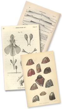Darwin sketches over 3000 illustrations, showcasing his research.   (Image: Darwin, C. R. 1862. On the various contrivances by which British and foreign orchids are fertilised by insects, and on the good effects of intercrossing. London: John Murray)