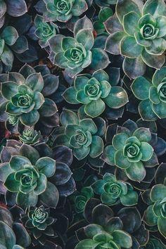 succulentes / plante grasse / home design / garden / green / decoration Succulent Landscaping, Planting Succulents, Succulent Plants, Indoor Succulents, Cacti, Propagate Succulents, Succulents Drawing, Indoor Plants, Rare Succulents