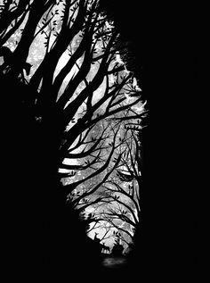 an abstract zebra | Dan Elijah Fajardo | 50 Mesmerising Designs That Make The Most Of Negative Space