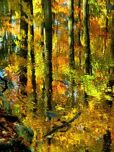 Reflected Forest; photo by Stanley Zimny