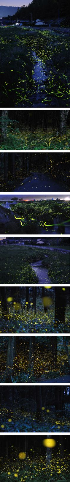 un shooting photo en « time-lapse » (pause longue) de lucioles dans un village au Japon.