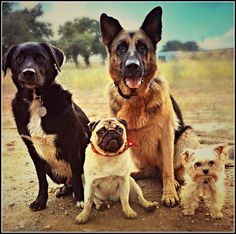 Our Family is on Yummypets.com #cute #pet #dog #animal #pup #puppy #chien