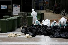 """Hong Kong government says bird flu cases were """"expected to increase in winter based on its seasonal pattern""""."""