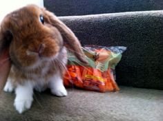 London Bunny Tasked With Guarding Royal Carrots