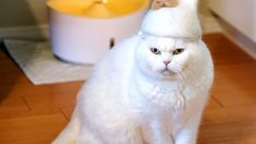 Japanese couple make caps for cats, set new trend in pet fashion