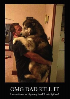 Awww poor baby! Funny thing is Bruno would attempt to climb on me like this when he was a puppy.