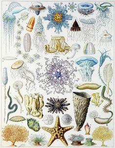 Faune et flore des océans.