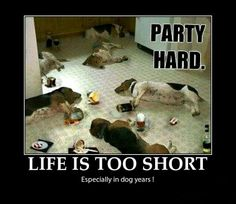 Bassett Party