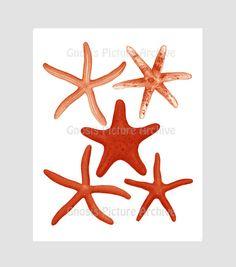 9 Best Starfish Beach Decor Prints Red