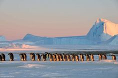 You Can Send A Postcard From Antarctica Once A Year! INSPIRED BY THE RECENT INCREASE IN TOURISM OPTIONS TO ANTARCTICA WE THOUGHT WE WOULD SHARE SOME FIRST HAND EXPERIENCES. ENJOY! #WeekendWanderlust #antarctica #travel