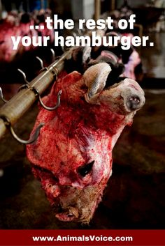 The rest of your hamburger Go vegan for your life and theirs