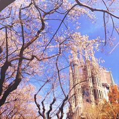 Spring in  Barcelona, Spain