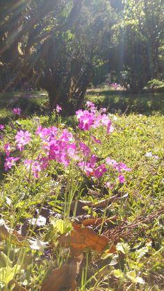 แสงสาดส่องกระทบดอกไม้ใบหญ้า