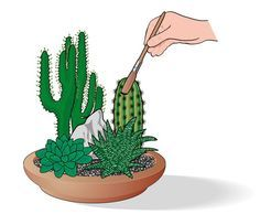 Come curare le piante grasse se stanno in casa