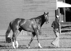 Secretariat Belmont | secretariat and ed sweet prior to 1973 belmont stakes
