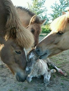 Animlal Love #wildlife #horses