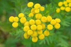 Pietayrtti Wild Flowers, Environment, Plants, Wildflowers