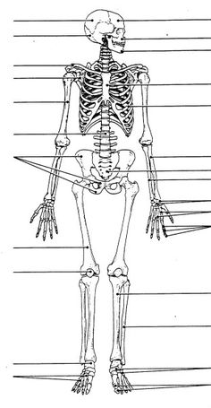Free Printable Human Skeleton Worksheet for Students and Teachers ...