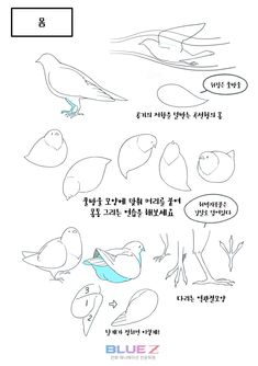 17 Ideas Drawing Ideas Animals Birds For 2019 Drawing Practice, Drawing Poses, Drawing Tips, Drawing Reference, Drawing Ideas, Bird Drawings, Animal Drawings, Easy Drawings, Manga Drawing Tutorials