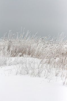 Wintertime places at a snowy beach.