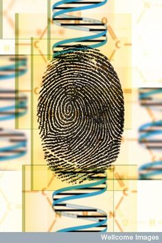 This interactive activity shows how separating out SHORT TANDEM REPEATS in DNA can give each person their own individual DNA finger print Dna Fingerprinting, Dna Technology, Interactive Activities, Learning Centers, Tandem, Genetics, Finger Print, Biology, Teaching