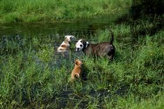 Cooling off in the pond on this hot Florida day.
