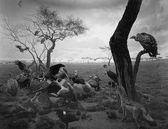 Hiroshi Sugimoto: Dioramas (Damiani) [SIGNED in English]
