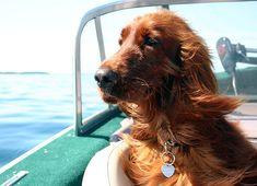 Mr. Copper Kid enjoys the boat ride on Lake Huron.