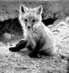 Super cute animal pictures <3