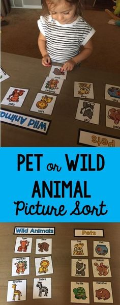 pet vs wild animal sorting for preschool-pre-k pet theme this pack has TONS of great printable activities for the pet them! pet vs wild animal sorting for preschool-pre-k pet theme this pack has TONS of great printable activities for the pet them! Jungle Activities, Animal Activities For Kids, Animal Crafts For Kids, Toddler Activities, Math Activities, Creative Activities For Toddlers, Preschool Themes, Preschool Classroom, Preschool Learning