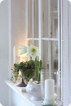 White amaryllis  by LILLA BLANKA: Solig söndag ~ Sunny Sunday
