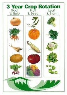Brighton and Hove Allotments Federation | Advice & tips | Gardening advice A-Z | Rotation | What's it all about?