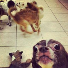Hey...you...whatchu looking at? Psycho dog! The Best Of Animal Photobombs – 35 Pics