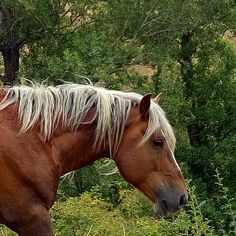 Blond #horse