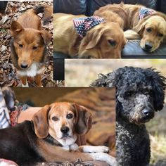 Dogs for sale or adoption in Alabama http://www.doggielife.com/dogs?rids=1&p=1