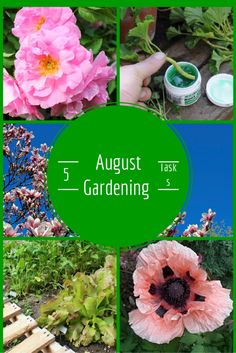 Five Things to Do In Your Garden - August