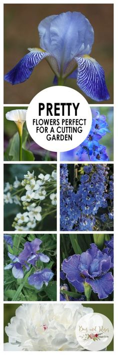 Pretty Flowers Perfect for A Cutting Garden ~ Bees and Roses - Modern Design Beautiful Flowers, Best Perennials, Growing Flowers, Indoor Window Garden, Pruning Plants, Flower Garden, Gardening For Beginners, Pretty Flowers, Garden Bloggers