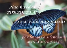 A alma é uma borboleta...