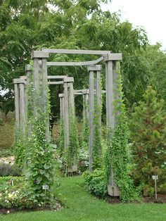 Trellis...this design is great for gourds and other vine plants.