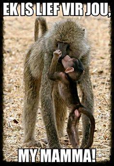 Ich liebe dich meine Mutter Ek is lief vir jou my mamma Ich liebe dich m Primates, Mammals, Mother And Baby Animals, Cute Baby Animals, Animals And Pets, Wild Animals, Animal Babies, Beautiful Creatures, Animals Beautiful