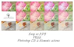 Isabelle Lafrance Photography » Blog Archive » FREE Easy as 1-2-3 Photoshop CS & Elements actions