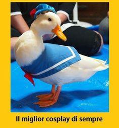 And the winner is... #tmlplanet #paperino #papera #animali #cosplay #disney #fumetti