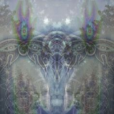 Some art by Alex Grey others our stock the background photo is mine
