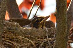 窝里最后一只小鸟