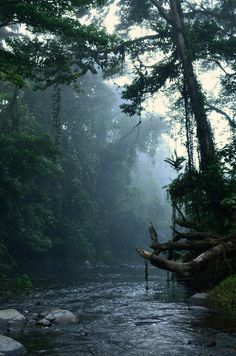 travelingcolors:  Koloki River Monrning | Solomon Island (by Thomas M. Perry)