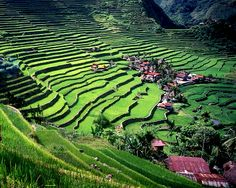 Banaue rice terraces in Ifuago, Philippines by @jouycee