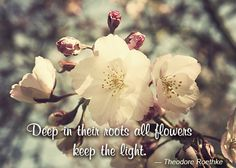 flowers with quotes from poetry - Google Search