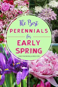 The Best Perennial Flowers for Early Spring Ready to start your spring garden? Perennials are the perfect way to enhance your landscaping year Spring Perennials, Best Perennials, Spring Plants, Flowers Perennials, Spring Garden, The Farm, Flower Garden Plans, Garden Ideas, Flowers Garden